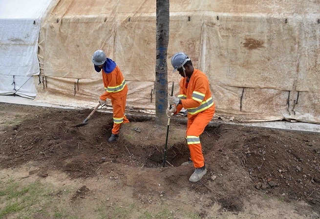 Consórcio do BRT de Salvador dá início a transplantes de árvores
