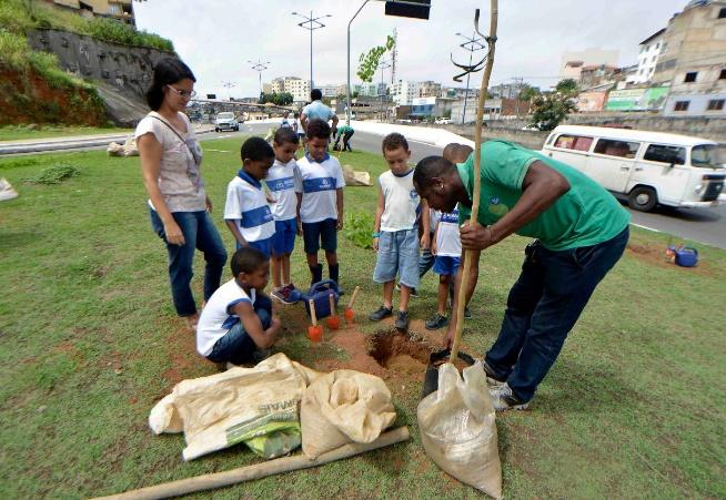 Salvador: Árvores são plantadas em compensação ao BRT