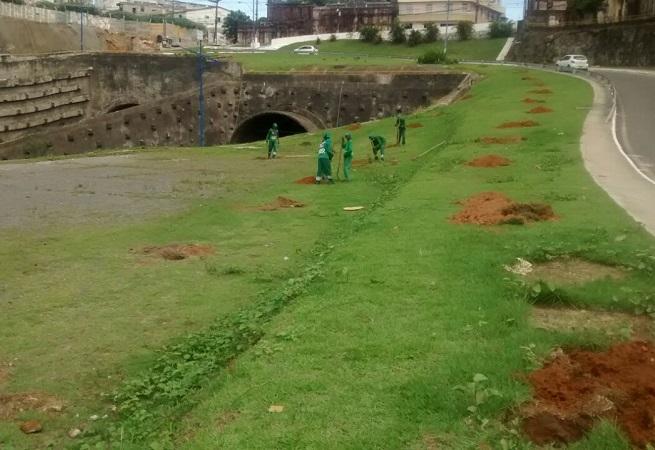 Prefeitura de Salvador fará plantio de árvores em compensação ao BRT nesta terça