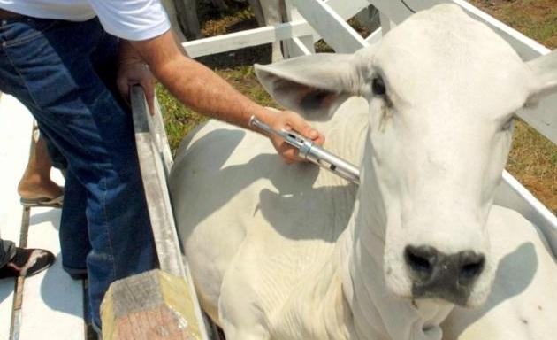 Bahia atinge 93,49% de vacinação contra aftosa na segunda fase da campanha