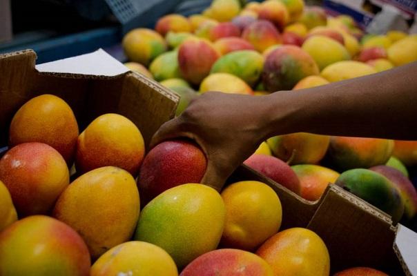 Senar inscreve para curso técnico em fruticultura em Juazeiro