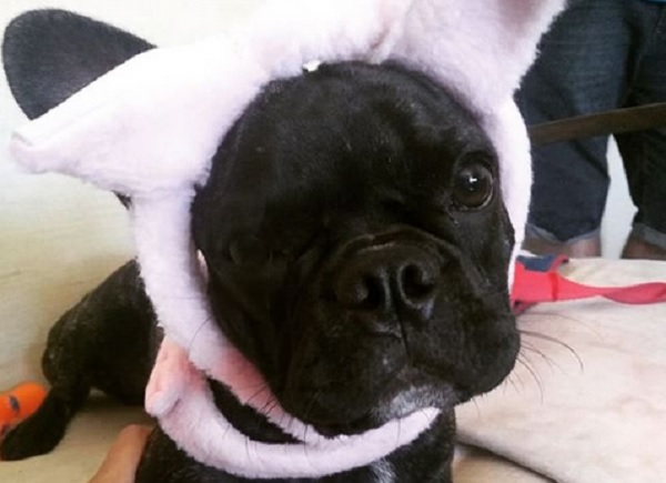 Abrigo promove feira de adoção de animais em Salvador