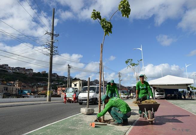 Salvador: Projeto Suburbana Verde terá mutirão com plantio de 300 mudas