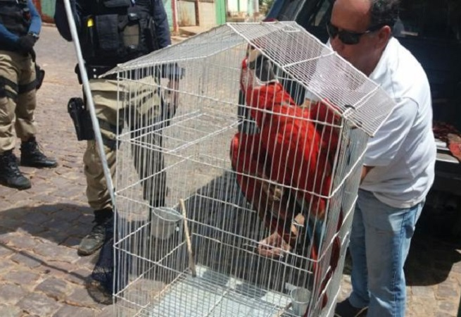 Fiscalização resgata mais de 200 animais silvestres no Oeste Baiano