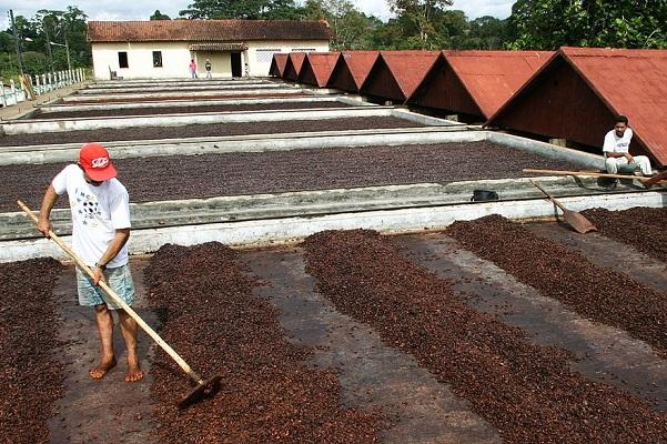 Bahia exporta 12 toneladas de cacau fino para Bélgica e França