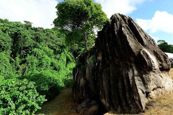 Salvador ganhará jardim etnobotânico com espécies sagradas do candomblé