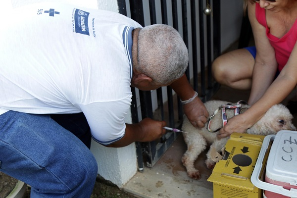 Campanha de vacinação antirrábica é prorrogada em Salvador