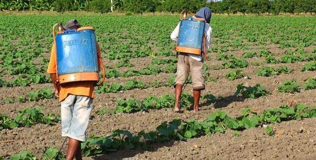 ONG aponta intoxicação aguda por agrotóxicos em 7 localidades rurais no Brasil