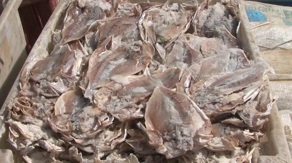 Ibama apreende cerca de duas toneladas de peixes em Sobradinho