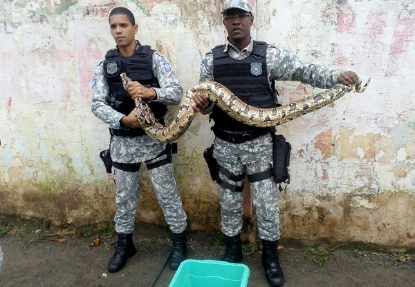 Guarda Civil de Salvador já resgatou quase 700 animais silvestres em 2018