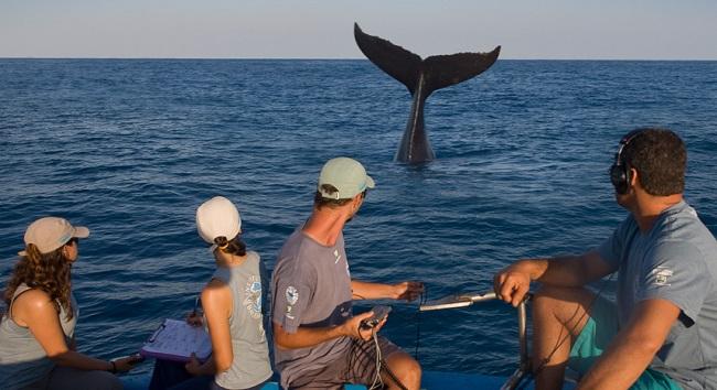 Instituto Baleia Jubarte organiza expedição de turismo científico em Abrolhos