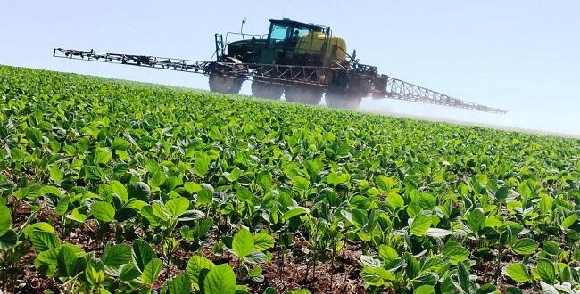 Justiça exige que Anvisa conclua parecer sobre herbicida usado em lavouras de soja