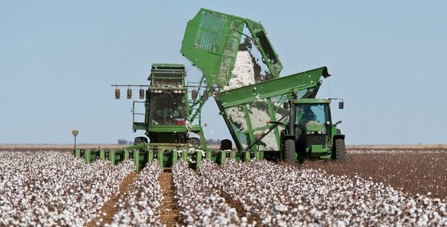 Bahia tem previsão de 15% de crescimento da safra de algodão