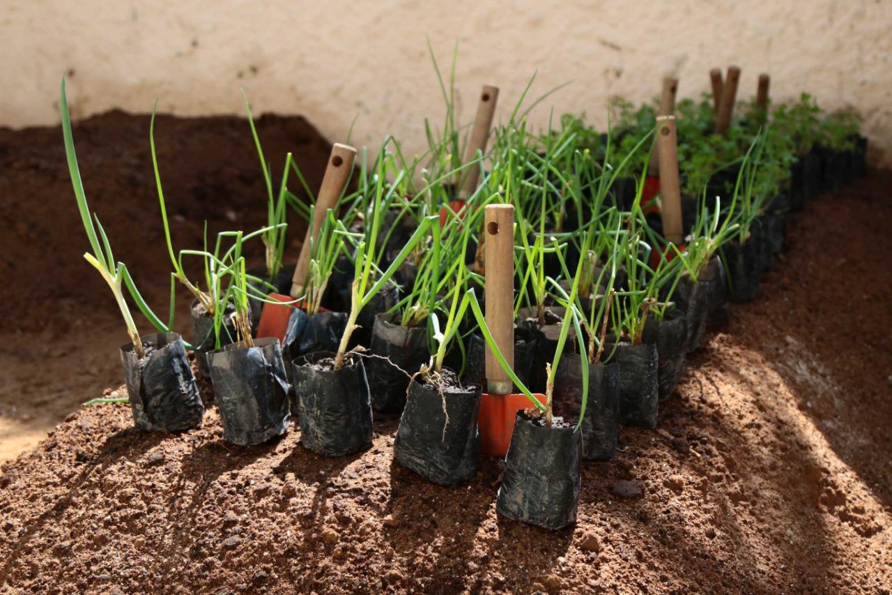 Salvador ganha primeira horta acessível neste domingo