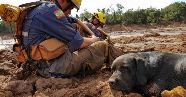 Cão que trabalhou em Brumadinho morre fazendo buscas em Santa Catarina
