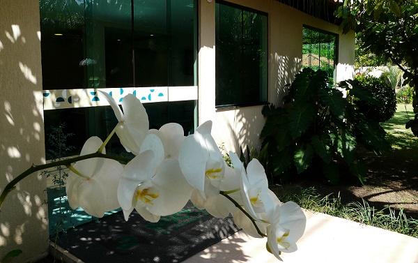 NOB promove Oficina de Orquídeas para pacientes oncológicos em Lauro de Freitas