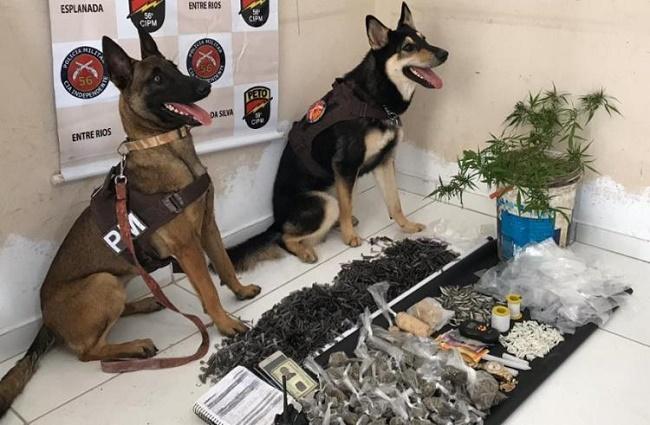 Cães da PM-BA localizam esconderijo de drogas em Entre Rios