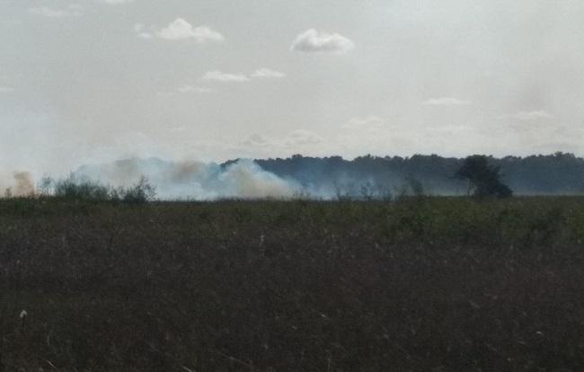 Incêndio atinge reserva em Canavieiras desde quinta-feira