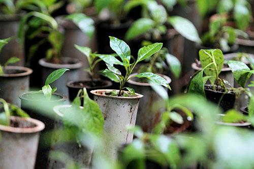 Horto Florestal recebe o plantio de mudas nesta quarta-feira