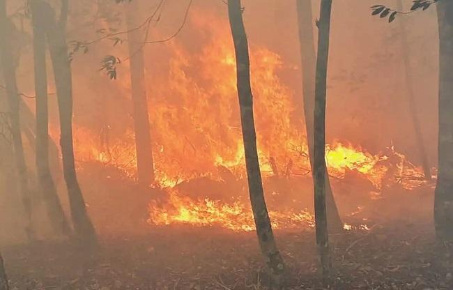 Bombeiros e brigadistas combatem incêndios florestais em 18 cidades baianas