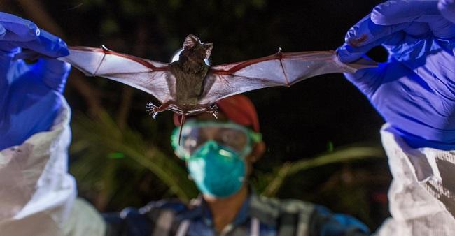 Cientistas dos EUA identificam 6 novos tipos de coronavírus em morcegos na Ásia
