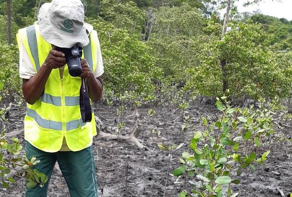 Bahia Norte recupera trecho do manguezal da Bacia do Rio Joanes