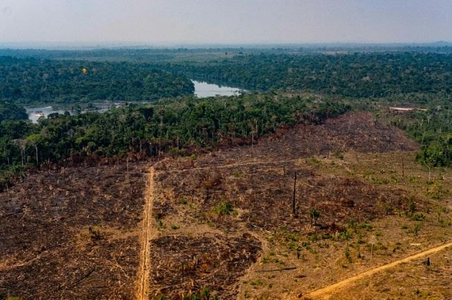 AGU cobra R$ 893 milhões de desmatadores da Amazônia