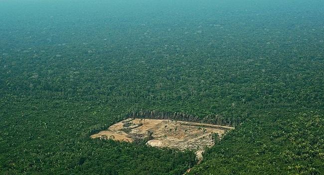 Governo Bolsonaro vai destinar R$ 500 milhões para conservação da Amazônia