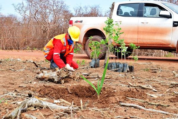 Engie inicia plantio de espécies nativas no Conjunto Eólico Campo Largo 2