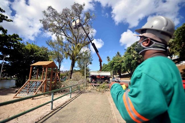 Árvores no entorno do Dique do Tororó passam por vistoria