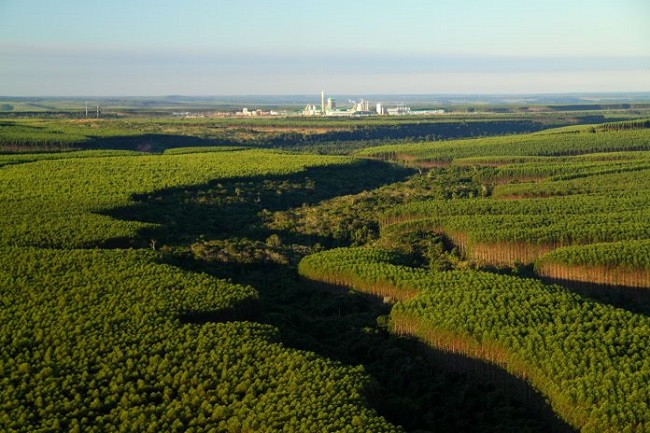Anel Florestal do Polo de Camaçari vai ganhar campanha para sua proteção