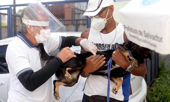 Campanha de vacinação antirrábica alcança 100 mil animais em Salvador