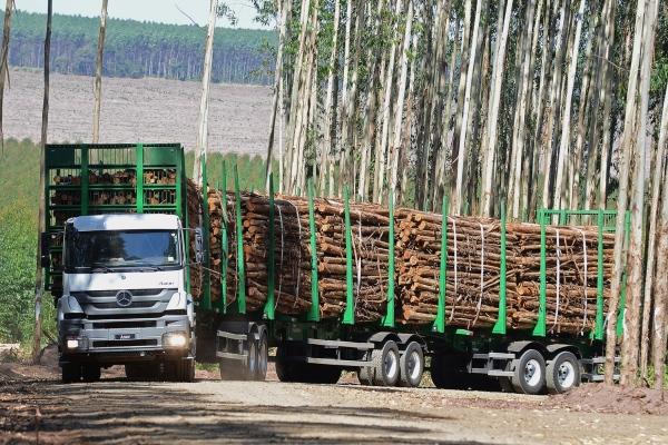 Eunápolis: Acidente com caminhão de eucalipto deixa 12 mortos na BR-101