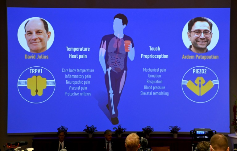Norte-americanos David Julius e Ardem Patapoutian vencem o Nobel de Medicina