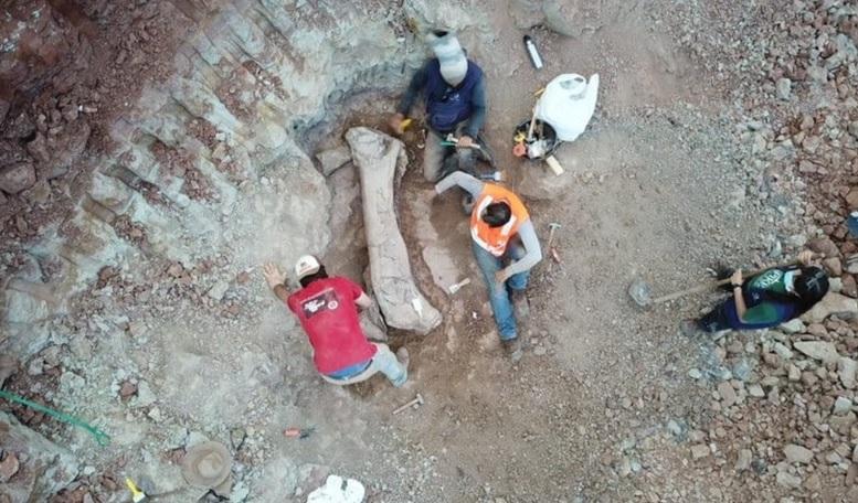 Osso de dinossauro gigante é encontrado em obra no Maranhão